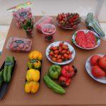 Myanmar Organic Vegetables