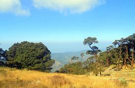 Mt Victoria